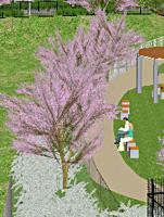 桧原桜公園 1:クリックして詳細